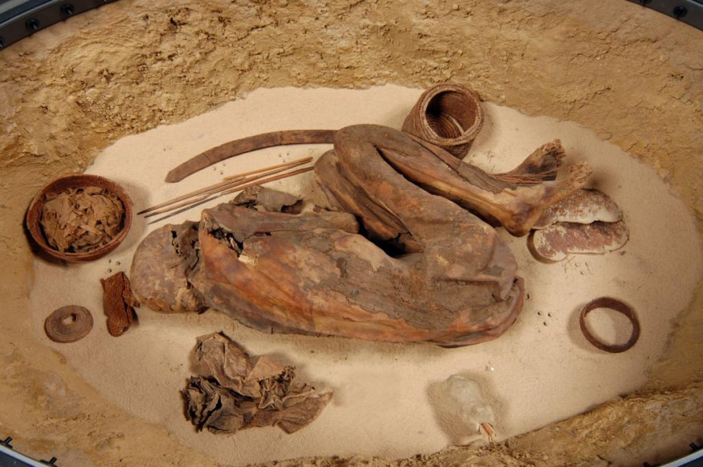 A prehistoric Egyptian mummy currently in the Museo Egizio in Turin has revealed an ancient embalming recipe (Photo: Museo Egizio)